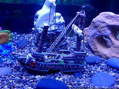 nick's pick for the new aquarium - a sunken pirate ship - DSC01468