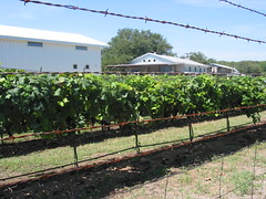Dry Comal Creek Winery (mkpdesigns) Tags: summer july letterboxing