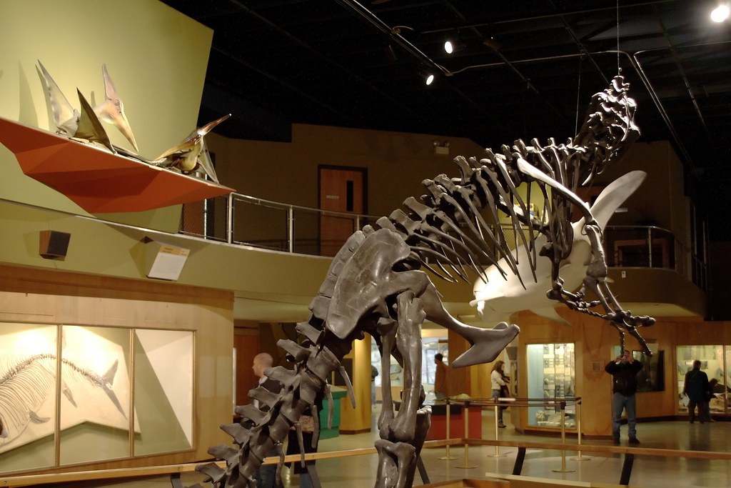 The world 39 s best photos of allosaurus and science flickr Dinosaur museum ohio