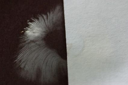 Spore print