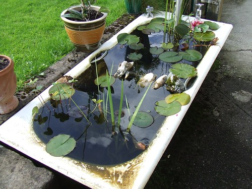 an old bath tub being used as a lily-pad pond, with many aquatic plants