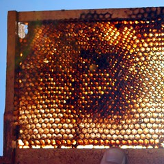 For Sale: Bee Nursery $1 (Lori-B.) Tags: me sunshine 1 golden glow farmersmarket market bluesky hexagon thumbnail honeycomb beehive beekeeping pentictonfarmersmarket queenbeebreedingtray