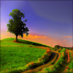 The tree on the hill (MyOakForest) Tags: sunset fab tree way bayern bavaria weide hill willow baum hgel mywinners abigfave colourartaward