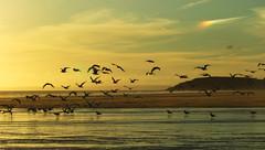 "Rhossili beach, on the sky phenomenon called ""sun dog"",Wales, UK (slavic.soul) Tags: wales sundog rhossili fujifilmfinepixs6500fd"