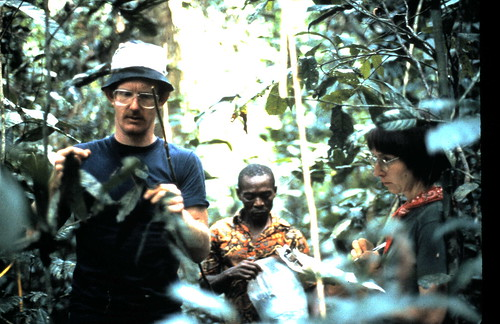 recording okapi feeding sign in 1987