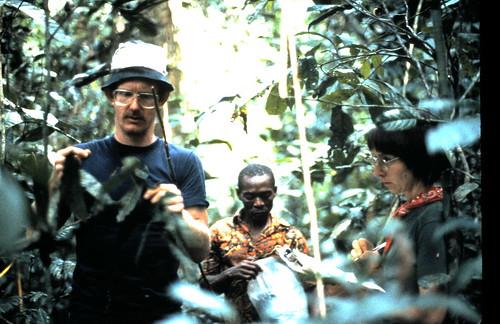 recording okapi feeding sign in 1987