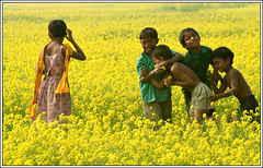 Meaningless, she thinks. [..Manikganj, Bangladesh..] (Catch the dream) Tags: winter friends colors smile field yellow season children lost fight fighter child bongo joy thinker vivid friendly mustard euphoria bengal elation bangladesh mustardfield bangla melee bengali bangladeshi bangali vivacity manikganj manikgonj supershot lostinthoughts flowercollection mustardflowers colorfulwaves theunforgettablepictures gettyimagesbangladeshq2