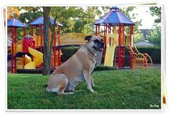 จีจี้ที่สวนเด็กเล่น 10-19-08