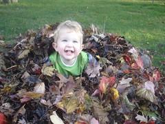 2008.10.19-Leaves.19.jpg