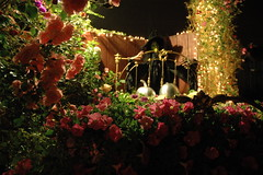 Bed of Flowers, witch, silver pumpkins, pea flowers, lights, Mill Rose Inn, Half Moon Bay, California, USA (Wonderlane) Tags: california ca flowers roses usa halloween lights hotel us unitedstates witch bedbreakfast bedandbreakfast quaint halfmoonbay happyhalloween californian wonderlane 4532 millroseinn bedofflowers peaflowers silverpumpkins