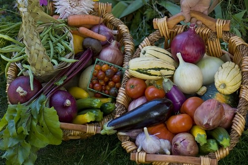 Bounty of Lively Organic Farm near Eugene, Oregon