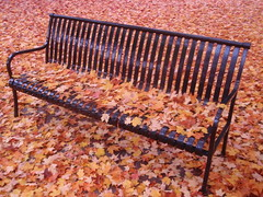 leaves and bench