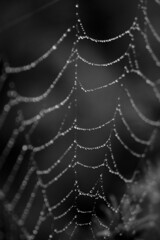 . (Tristan C) Tags: macro spiderweb cobweb raindrops starsinthesky