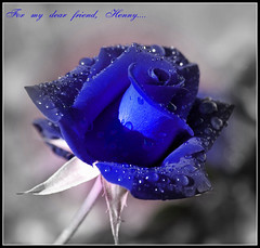 Especially for Henny... Thank you for your great friendship... (JannaPham) Tags: flower rose friendship haiku henny damniwishidtakenthat bestofvietbestphoto jannapham