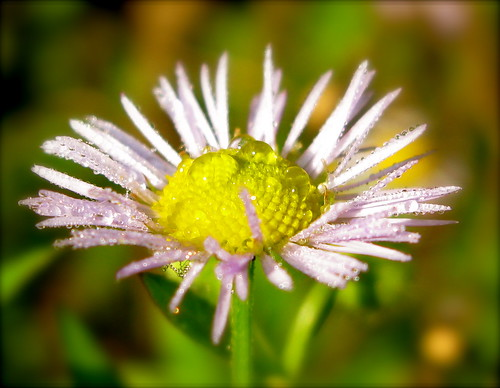 healing flower ...