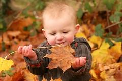 Autumn concentration