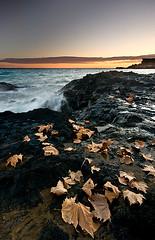 Entre verano y otoo 2 (SanchezCastillejo) Tags: beach hojas sony murcia otoo a700 castillejo