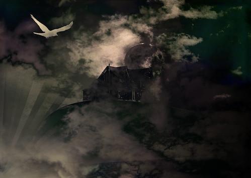 casa de ave