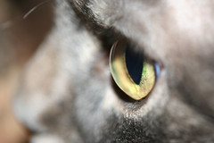 Die Beobachtung des Beobachters (Rimfari) Tags: tiere katze makro auge