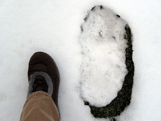 Evidence of Bigfoot? (Click to enlarge)