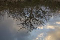 Riflessi con perastro (candido33) Tags: sardegna italy alberi mirror italia tramonto nuvole cielo riflessi sera specchio laghetto stagno nuoro zoneumide sughere pratosardo photobyaureliocandido