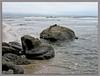 Orton Beach Scene (MyRidgebacks - Sharon C Johnson) Tags: halfmoonbay sanmateocoast naturescene northernca mavericksbeach abigfave ortonimagery impressedbeauty myridgebacksphotography lizasenchantedgarden