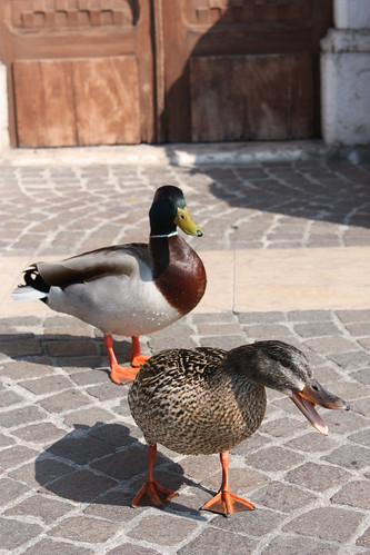 Cute couple of the day in Lazise