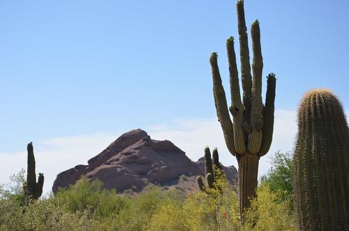 Arizona 2011 461