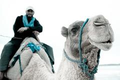 camel alexander2 (Daniel Kocian Photography) Tags: ocean blue winter man eye beach smile animal sand desert atlantic camel morocco essaouira 2010 mogador