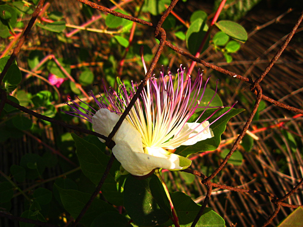 23-05-2011-flower