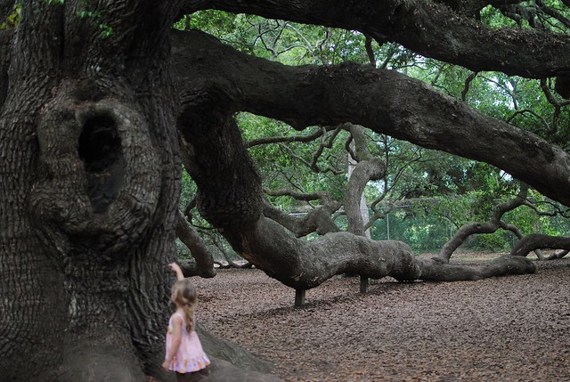 little cutie exploring the angel oak