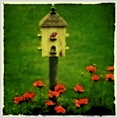 Poppy Luv (jumpinjimmyjava) Tags: flowers square cardinal birdhouse poppy poppies mybackyard jlbrown jumpinjimmyjava