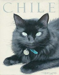 "Chile cat - acrylic on canvas • <a style=""font-size:0.8em;"" href=""http://www.flickr.com/photos/64357681@N04/5867074352/"" target=""_blank"">View on Flickr</a>"