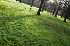 Long shadows (Mister Rad) Tags: park trees shadow london grass unitedkingdom nikond50 kensington kensingtongardens af35mmf2d