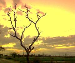 Sun ('HD' nature) Tags: desktop sunset wallpaper orange cloud sun color colour tree nature colors yellow clouds sunrise landscape evening scenery colorful colours image sony shade highdefinition hd hq punjab dsch3 derabassi