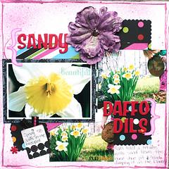 Sandy Daffodils