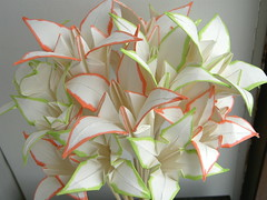 PICT4284_2 (atmobius) Tags: flower origami bouquet
