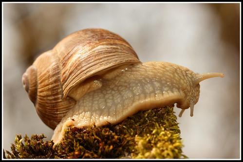 Escargot / Snail / Schnecke