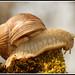 100. Escargot / Snail / Schnecke
