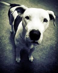 max... el mejor amigo de mi pizza. (Just call me Jim) Tags: dog pet max amigo perro canino mascota excellence yougotit plus4 plus4excellence invitedphotosonlyplus4