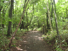 吐竜の滝への道
