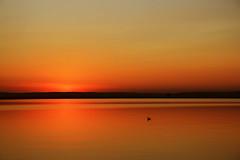 seagull watching the sunset (bitzi  ion-bogdan dumitrescu) Tags: sunset red sky orange lake bird water landscape gold golden seagull gull clear romania olt bitzi judetul mosteni ibdp flickrlovers pelangaslatina img3947modsh ibdpro wwwibdpro ionbogdandumitrescuphotography