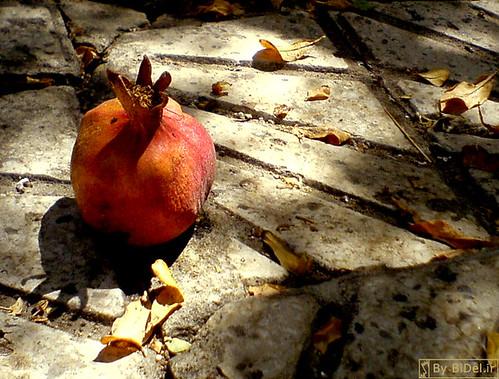 Single Pomegranate by BiDel.ir.
