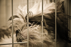 Freedom (***roham***) Tags: bw dog animal puppy freedom eyes sad free cage flickrlovers