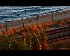 The Moment... (epicture's) Tags: autumn light pordosol sunlight fall sol beach train afternoon frommywindow entardecer vilassar endoftheday findeldia fromlivingroomwindow