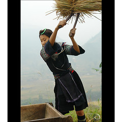 Hmong woman Rice drumming (NaPix -- (Time out)) Tags: portrait black mountains women asia southeastasia rice working harvest vietnam explore vision sapa hmong paddies indigoblue explored explorefrontpage laochaivillage napix visionquality