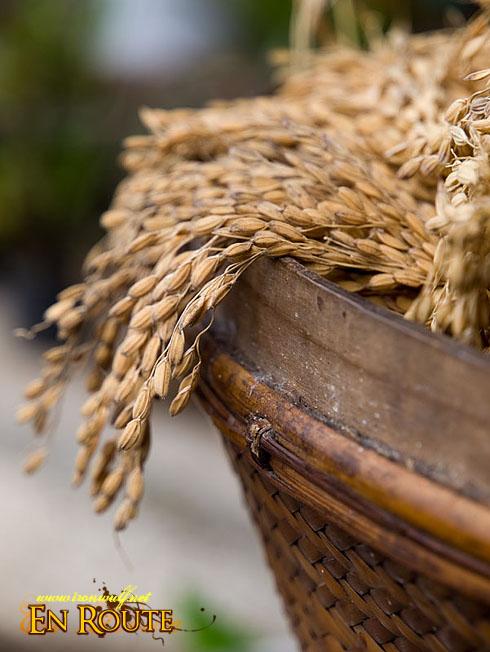 Sagada Rice Grains