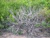 Plant 3 (cobalt.penguin) Tags: beach dunes sydney peninsula avalon barranjoey