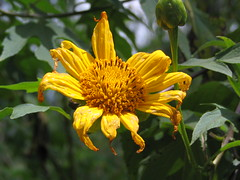 All Picts 1107 (Klementine's Photo Hub!) Tags: flowers colors rainbow floraandfauna