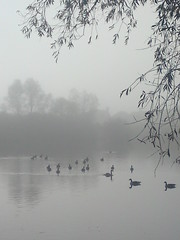 C905 mobile 006 (kjlast) Tags: park autumn winter england mist lake fall water birds mobile fog kent phone ericsson sony cell waterfowl leybourne theyaremine c905 pleasedontusethisimageonwebsites blogsorothermediawithoutmyexplicitpermissionthesephotosarentfree pleaserespectthatallrightsreserved